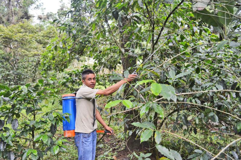 Aplicación de nutrientes biológicos y orgánicos